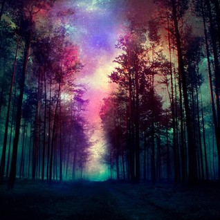 trip forest